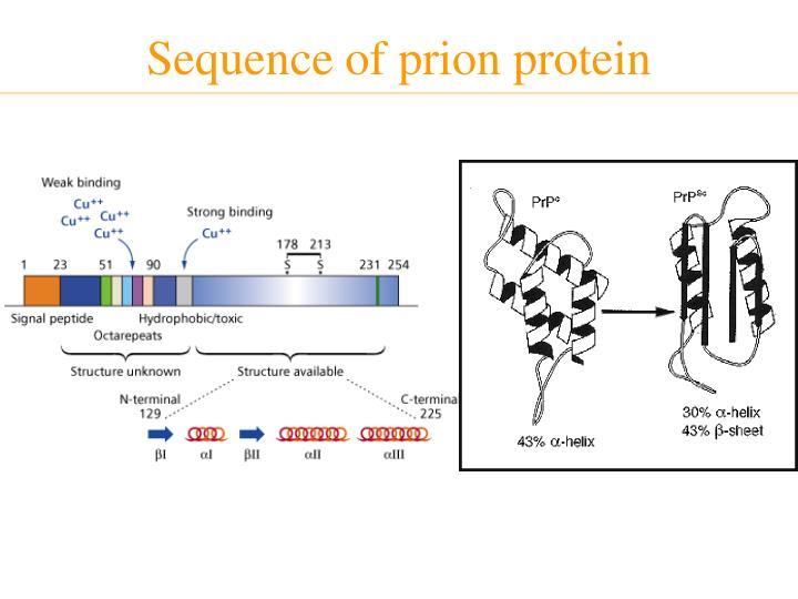 Sequence of prion protein