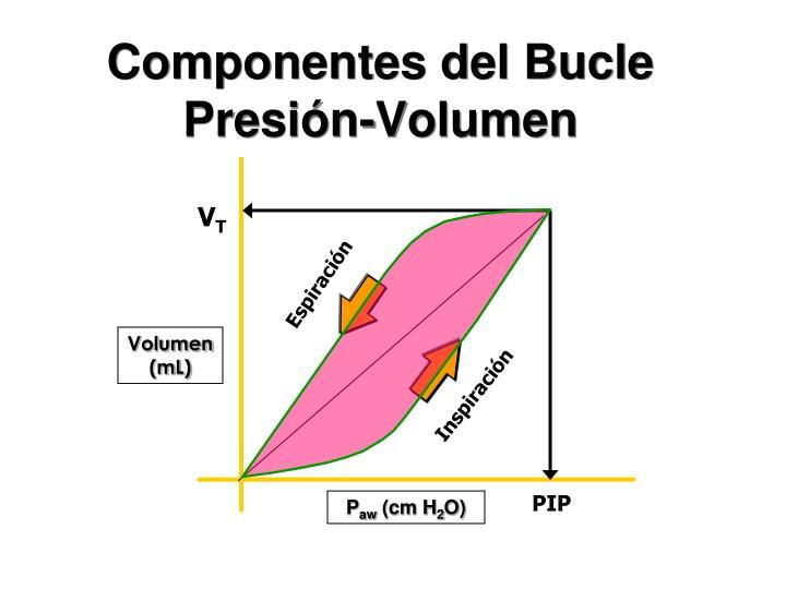 Componentes del Bucle Presión-Volumen