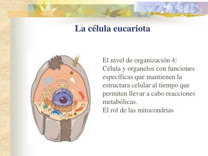 La célula eucariota