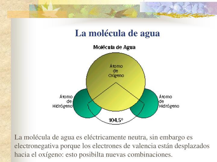La molécula de agua