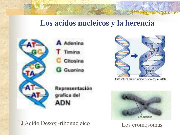 Los acidos nucleicos y la herencia