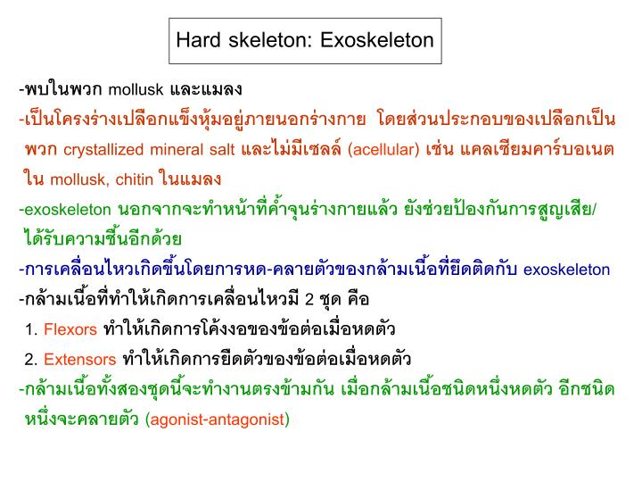 Hard skeleton: Exoskeleton
