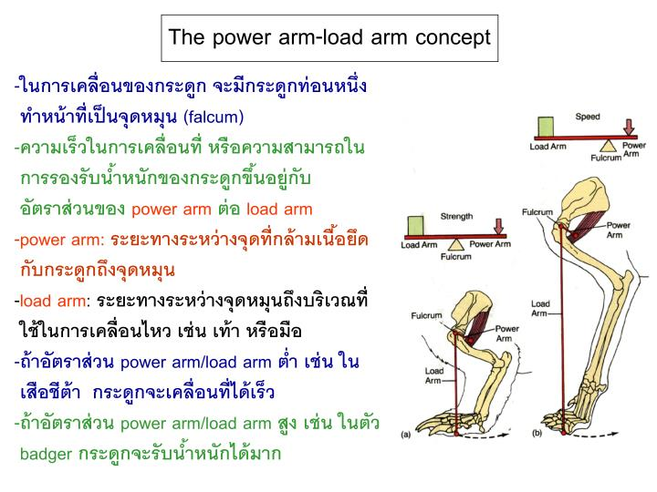 The power arm-load arm concept