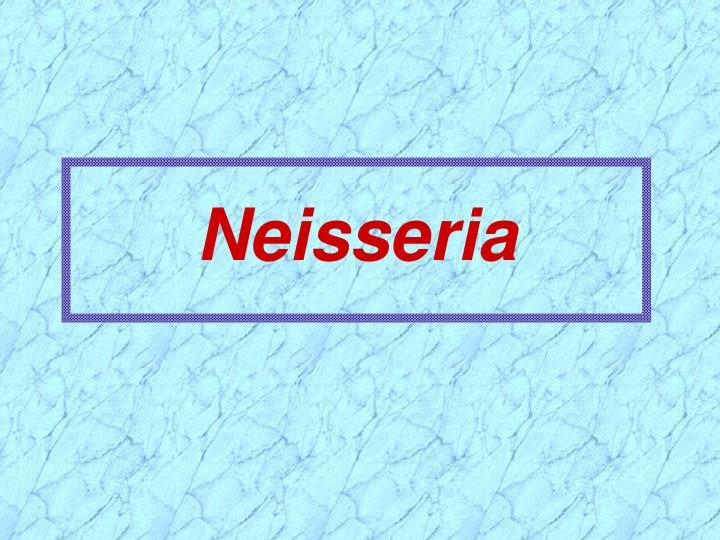 Neisseria