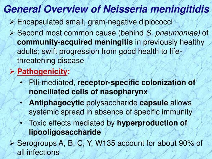 General Overview of Neisseria meningitidis