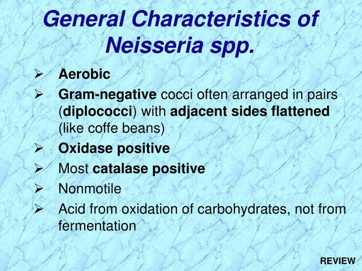 General Characteristics of Neisseria spp.