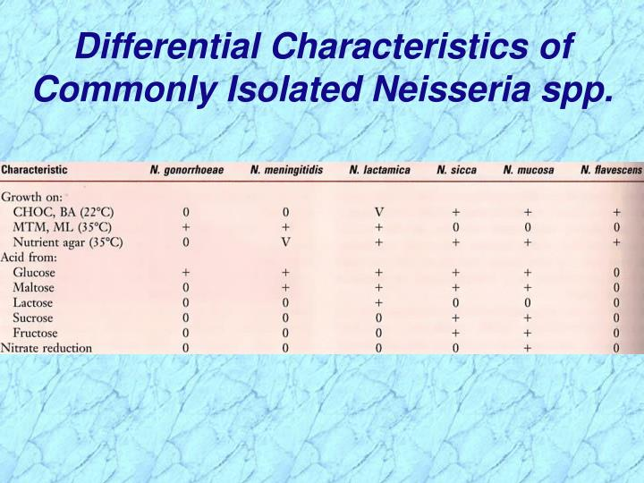 Differential Characteristics of Commonly Isolated Neisseria spp.