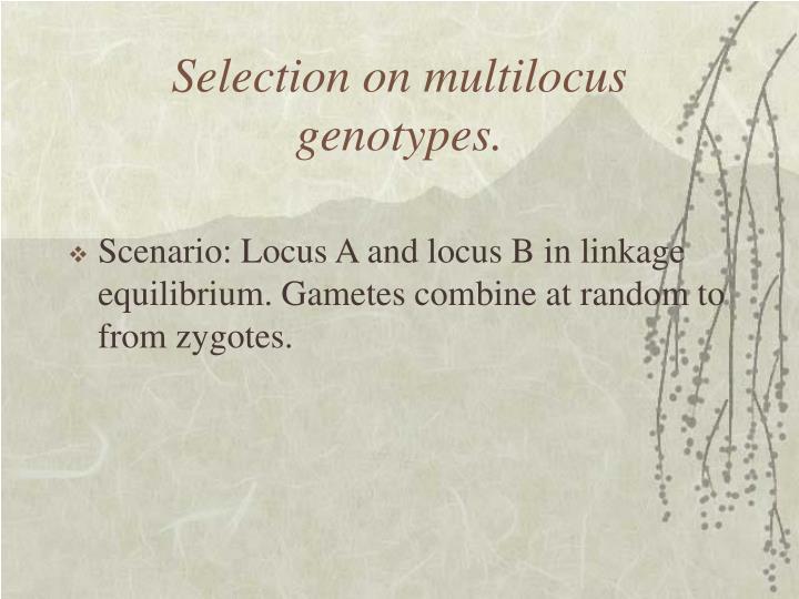Selection on multilocus genotypes.