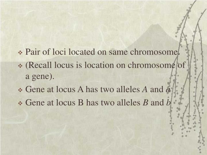 Pair of loci located on same chromosome.