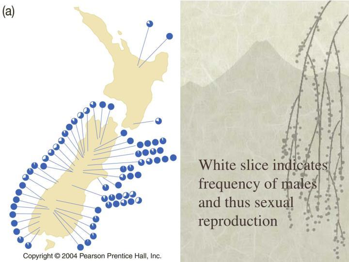 White slice indicates