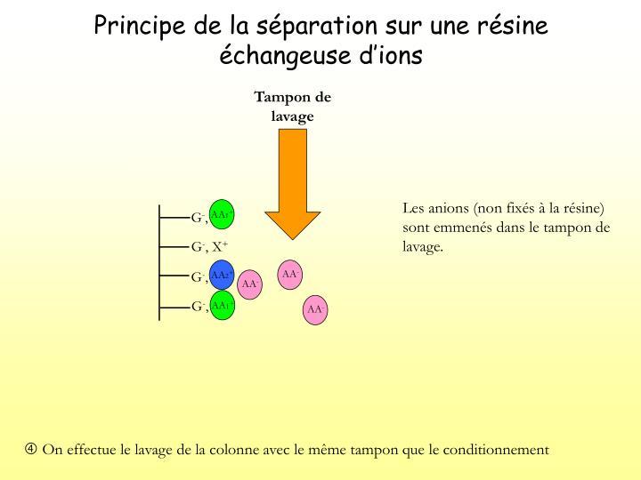 Principe de la séparation sur une résine échangeuse d'ions
