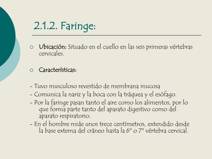 2.1.2. Faringe: