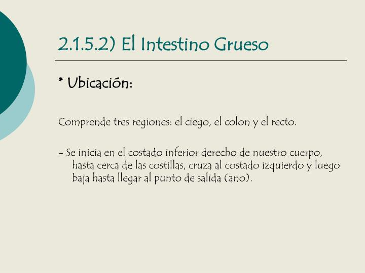 2.1.5.2) El Intestino Grueso
