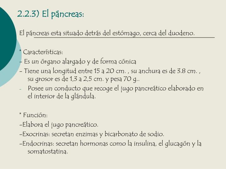 2.2.3) El páncreas: