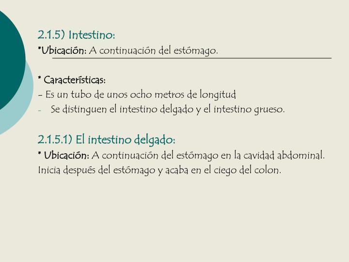 2.1.5) Intestino:
