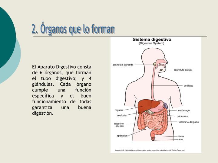 2. Órganos que lo forman