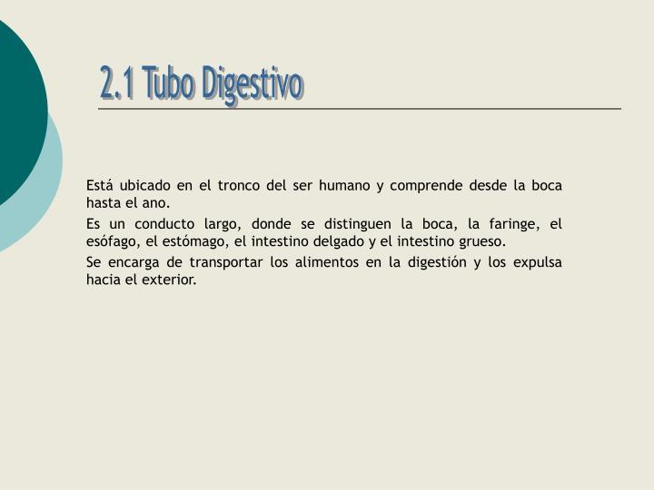 2.1 Tubo Digestivo