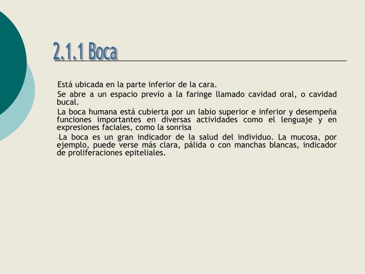 2.1.1 Boca
