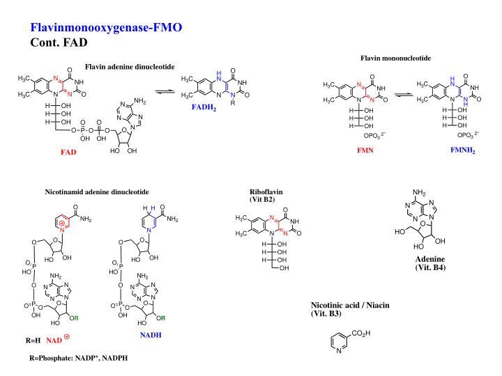 Flavinmonooxygenase-FMO