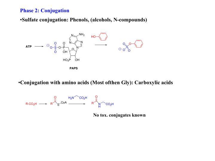 Phase 2: Conjugation