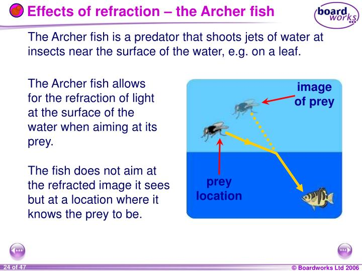Effects of refraction – the Archer fish