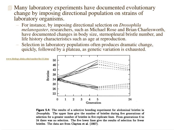 Many laboratory experiments have documented evolutionary change by imposing directional population on strains of laboratory organisms.