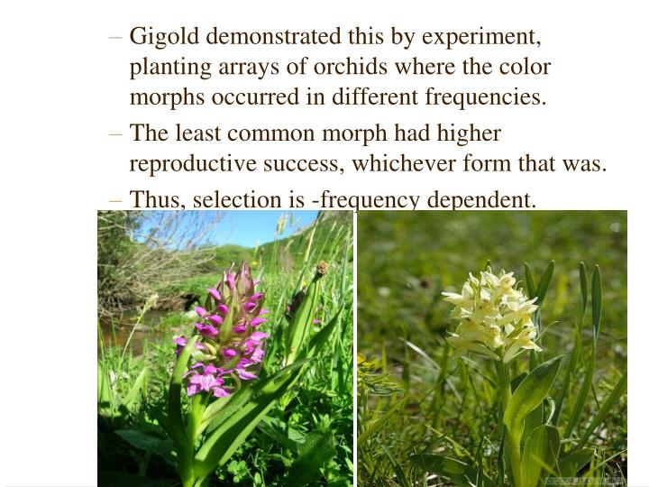 Gigold demonstrated this by experiment, planting arrays of orchids where the color morphs occurred in different frequencies.