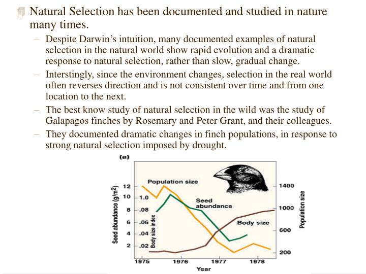 Natural Selection has been documented and studied in nature many times.