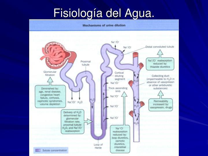 Fisiología del Agua.