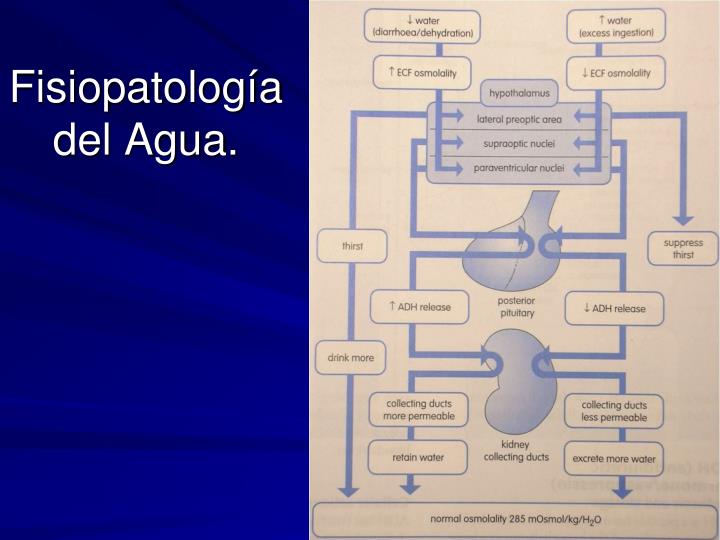 Fisiopatología del Agua.