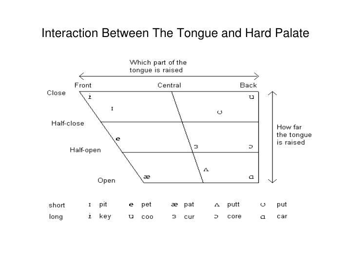 Interaction Between The Tongue and Hard Palate