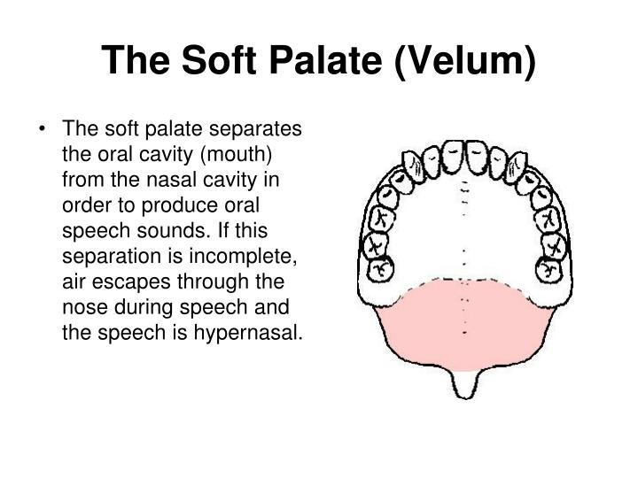 The Soft Palate (Velum)