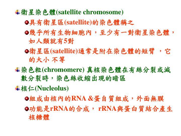 衛星染色體