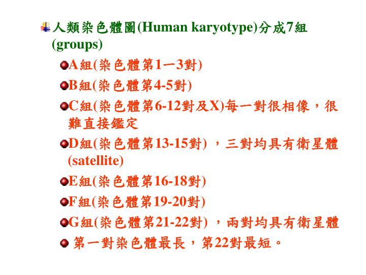 人類染色體圖
