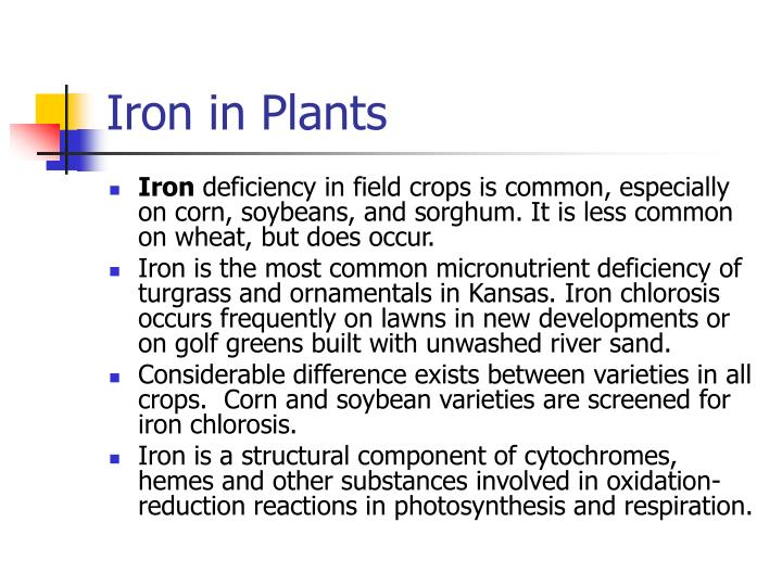 Iron in Plants