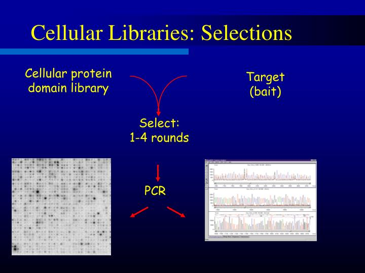 Cellular Libraries: Selections