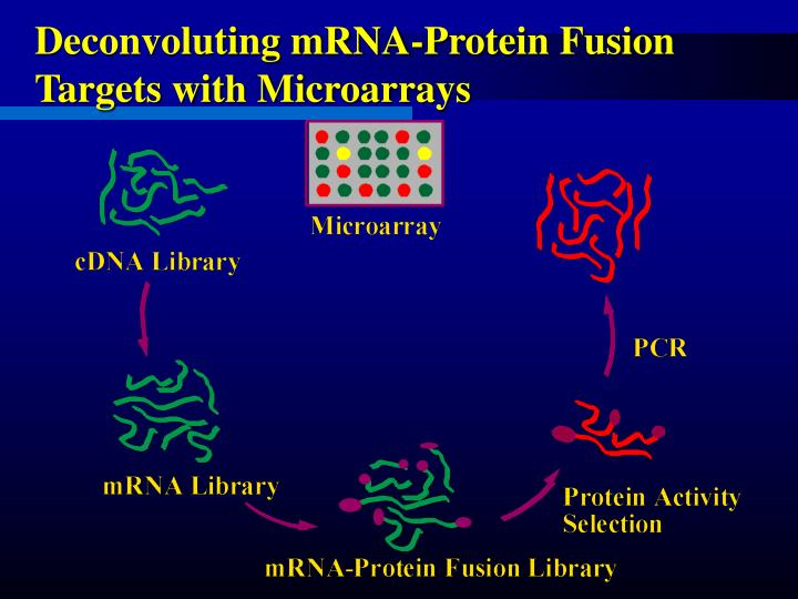 Deconvoluting mRNA-Protein Fusion Targets with Microarrays