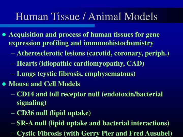 Human Tissue / Animal Models