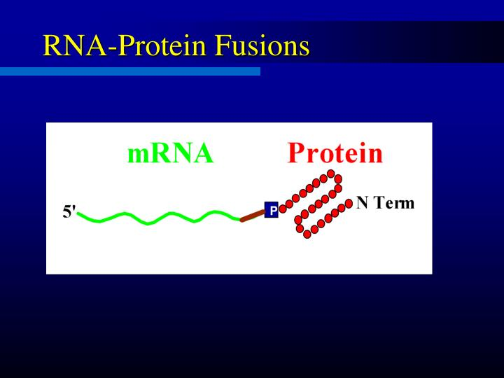RNA-Protein Fusions
