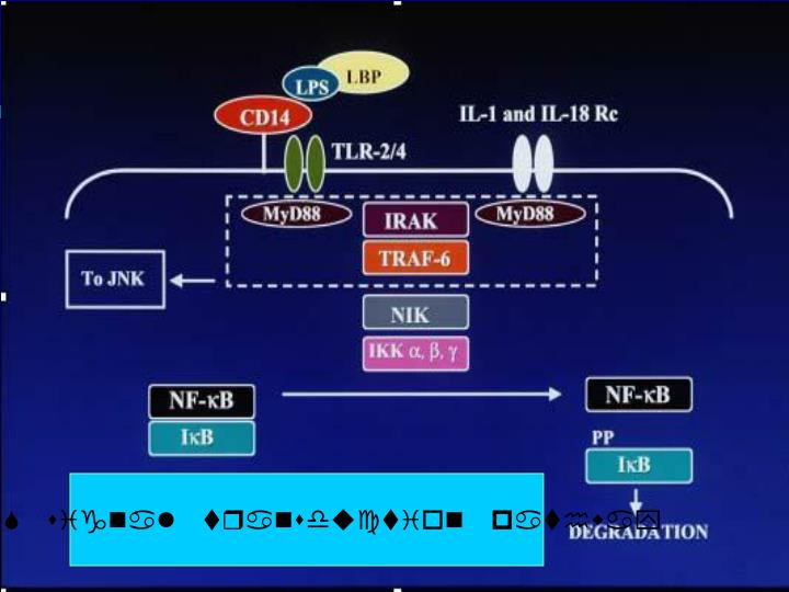 Fig. 2  LPS signaling pathways