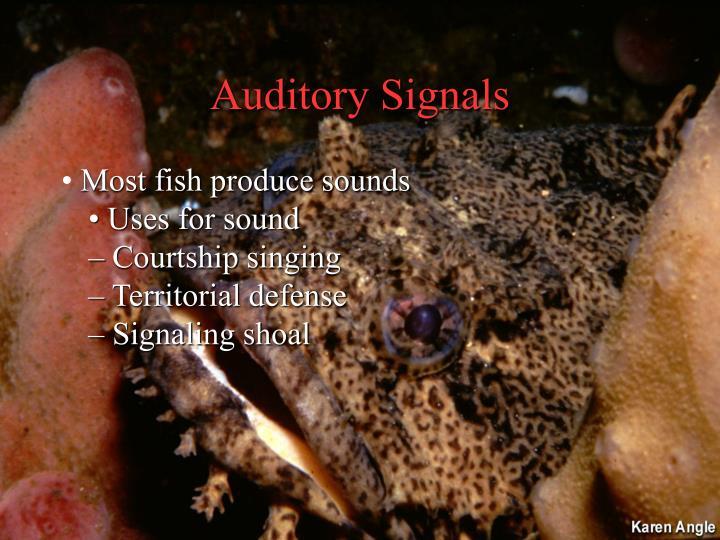 Auditory Signals