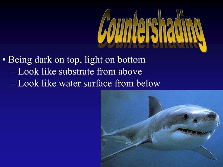Countershading