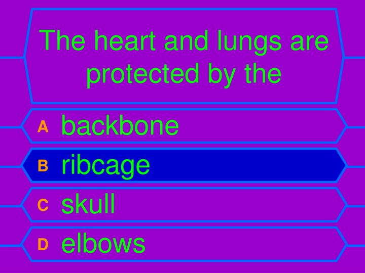The heart and lungs are protected by the