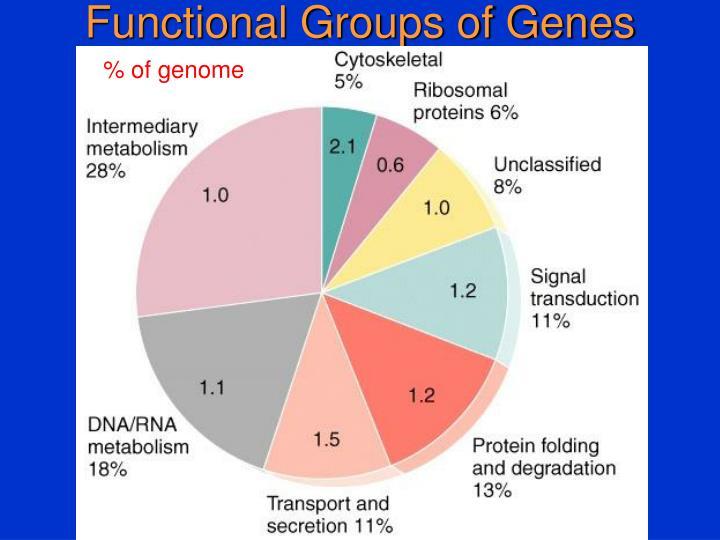 Functional Groups of Genes