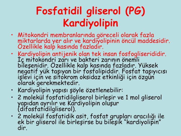Fosfatidil gliserol (PG)