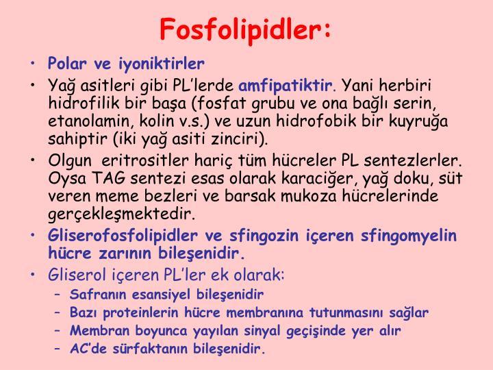 Fosfolipidler: