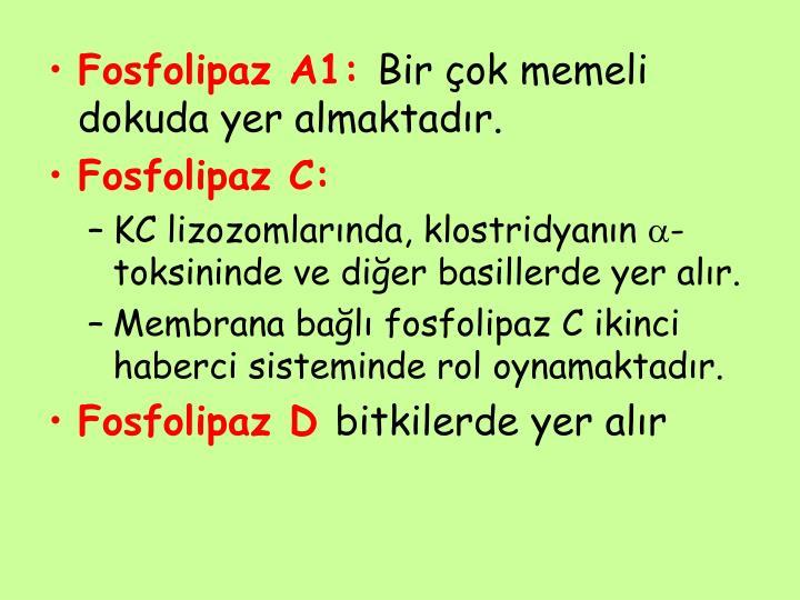 Fosfolipaz A1: