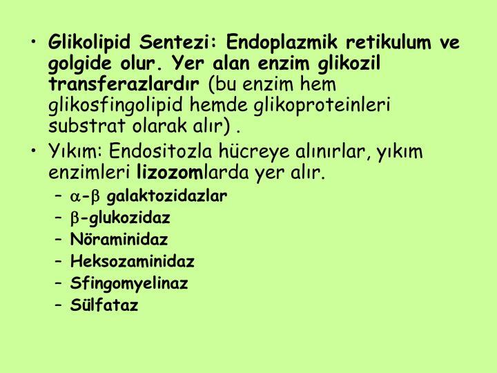 Glikolipid Sentezi: Endoplazmik retikulum ve golgide olur. Yer alan enzim glikozil transferazlardır