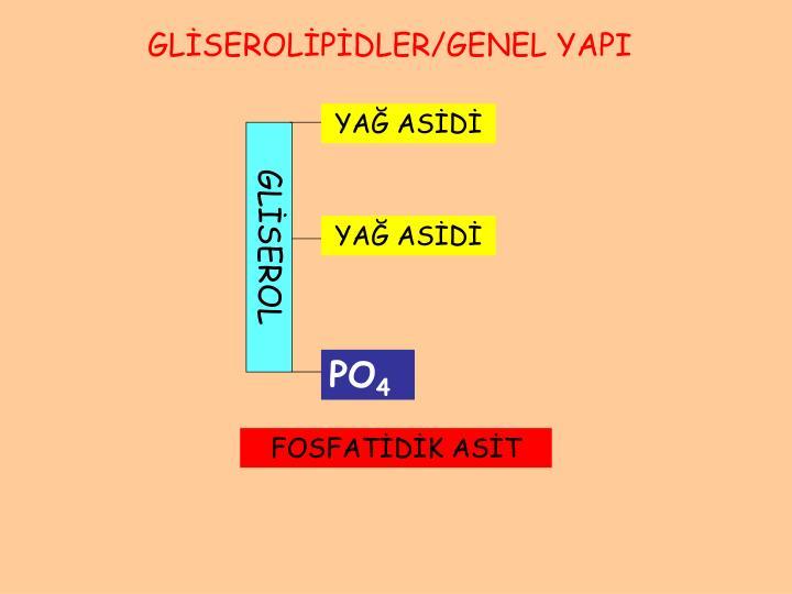 GLİSEROLİPİDLER/GENEL YAPI