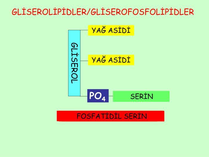 GLİSEROLİPİDLER/GLİSEROFOSFOLİPİDLER